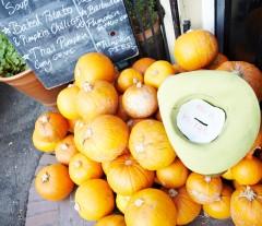 Pumpkin Rescue Disco Soup Food Newcastle 131